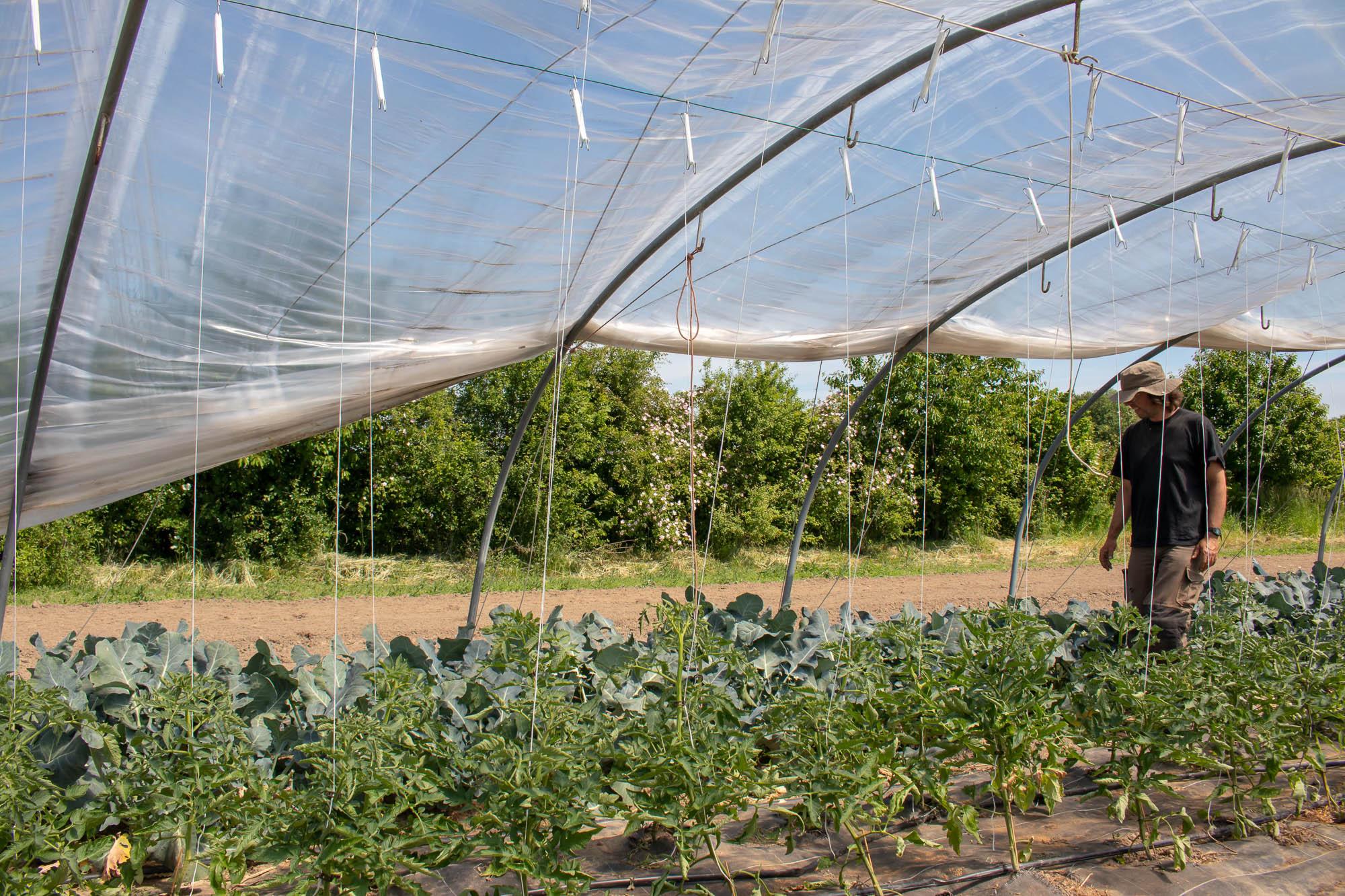 bioboer klaas kiemkracht biologische groenten